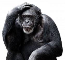 Chimpanzee PNG Image - PurePNG | Free transparent CC0 PNG Image Library