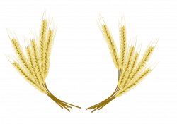 Beer Common wheat Barley Clip art - wheat 1280*905 transprent Png ...