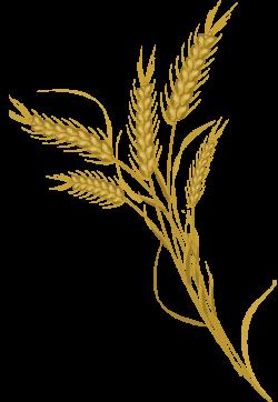 Grain Clipart wheat farming - Free Clipart on Dumielauxepices.net