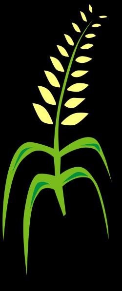 File:Grain.svg - Wikimedia Commons