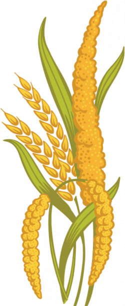 Grain clipart millet - Pencil and in color grain clipart millet
