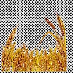 HD Oat Grain Clip Art Pictures ~ Vector Images Design