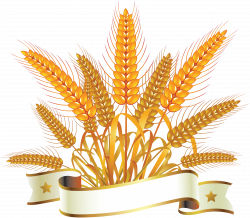 Wheat PNG images free download