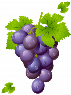 Grape with Leaves PNG Clipart Picture | fintyfluszki | Pinterest ...