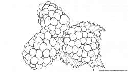Blackberry Plant Drawing at GetDrawings.com | Free for personal use ...