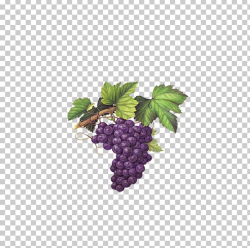 Red Wine Muscat Chardonnay Grape PNG, Clipart, Blackberry ...