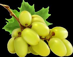 Bunch of grapes, vector icon [преобразованный].png | Pinterest ...