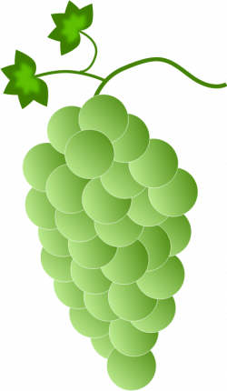 Collection of 14 free Grype clipart grape vine. Download on ubiSafe