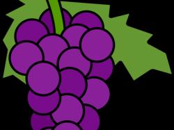 Grape Clipart Printable - Cartoon Grapes , Transparent ...