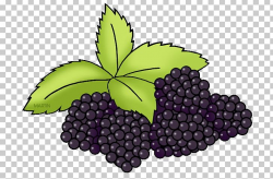 Grape Leaves Food Water Infusion PNG, Clipart, Blackberry ...