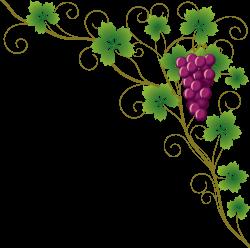 Common Grape Vine Grape leaves Wine Clip art - Grapes 4759*4732 ...