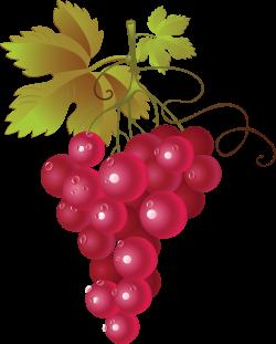 Red Wine Common Grape Vine Clip art - Grape Png Image 2848*3554 ...