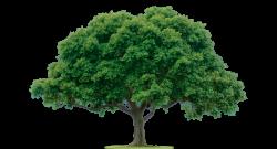 tree of knowledge   KMbeing