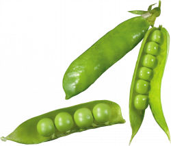 Pea PNG Image - PurePNG | Free transparent CC0 PNG Image Library