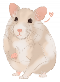 my hamster is so cute | Tumblr