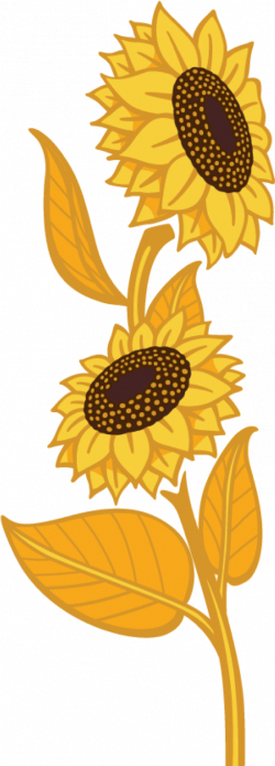 Sunflower Flax | Country Harvest