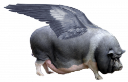 FLYING PIGS – IN PURSUIT OF PIGASUS AND OTHER PORKERS ON THE WING ...