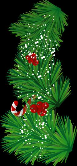 Pine Branch Clip Art (66+) | Scrapbook images | Pinterest | Clip art ...