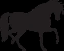 Black horse siluete png image   PNG   Pinterest   Black horses