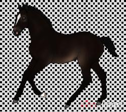 Horse Cartoon clipart - Transport, transparent clip art