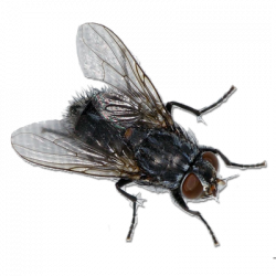 Fly PNG Transparent Fly.PNG Images.   PlusPNG