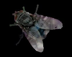 15 House fly png for free download on mbtskoudsalg