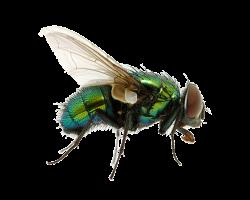 Housefly   VS Battles Wiki   FANDOM powered by Wikia