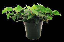 Image - Houseplant.png | Warehouse 13 Artifact Database Wiki ...