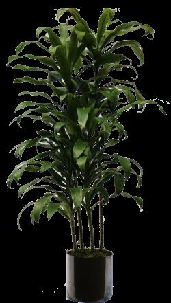 15 Indoor plant png for free download on mbtskoudsalg