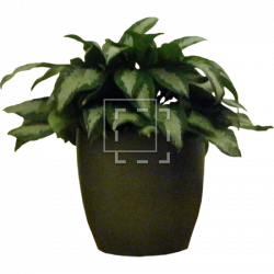 Potted House Plant - Immediate Entourage