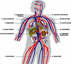 BASIN: General Information on Nitrogen