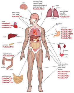 Human Body Anatomy Internal Organs Diagram | Stay Fit and ...