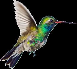 Hummingbird Clipart - Bee Hummingbird Png , Transparent ...