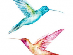 Free Hummingbird Clipart, Download Free Clip Art on Owips.com