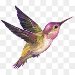Hummingbird, Hummingbird Clipart, Bird, #44580 - PNG Images ...