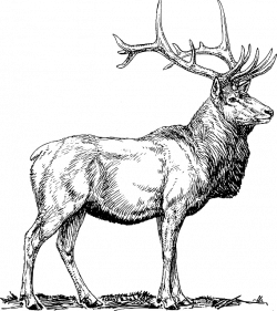 Free Image on Pixabay - Elk, Moose, Deer, Head, Animal | Pinterest ...