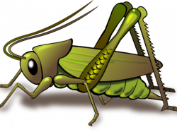 Bug Clipart june bug - Free Clipart on Dumielauxepices.net