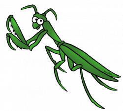 Insect clipart praying mantis - Pencil and in color insect clipart ...