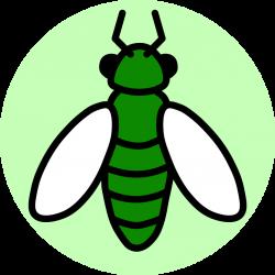 Insect Ambassadors – Sharing insect education