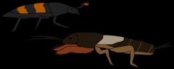 Insects Underground by WildandNatureFan on DeviantArt