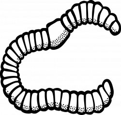 Worm Animal Insect PNG Image - Picpng