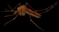 Clipart - mosquito
