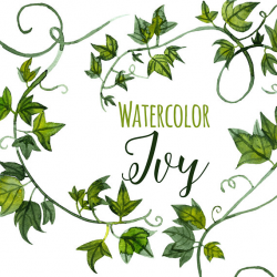 Watercolor Green Ivy Clipart, Ivy Tendrils Illustration, Fancy clip ...