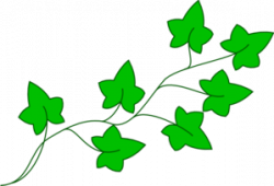 Free Ivy Cliparts, Download Free Clip Art, Free Clip Art on Clipart ...