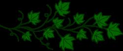 Vine of Ivy Leaves | Tattoo | Vine drawing, Leaf drawing ...
