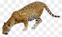 Jaguar Clipart Mammal Animal - Coyote Buttes, The Wave - Png ...