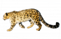 Jaguar Icon | Web Icons PNG