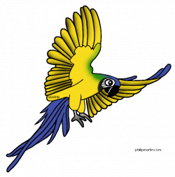 28+ Collection of Rainforest Bird Clipart   High quality, free ...