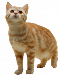 7 Cat Png Image Download Picture Kitten