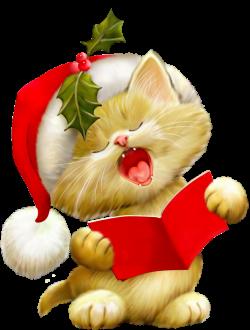 Fah lalalala | Picture of the day | Pinterest | Cat, Santa hat and Santa
